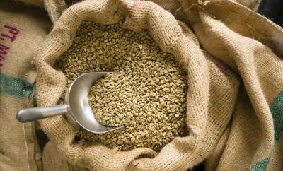 acido clorogenico e chicchi di caffè verde